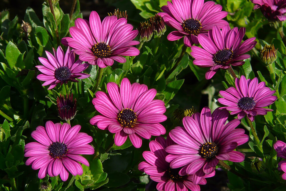 5 of the Best Flowers for Your Spring Garden