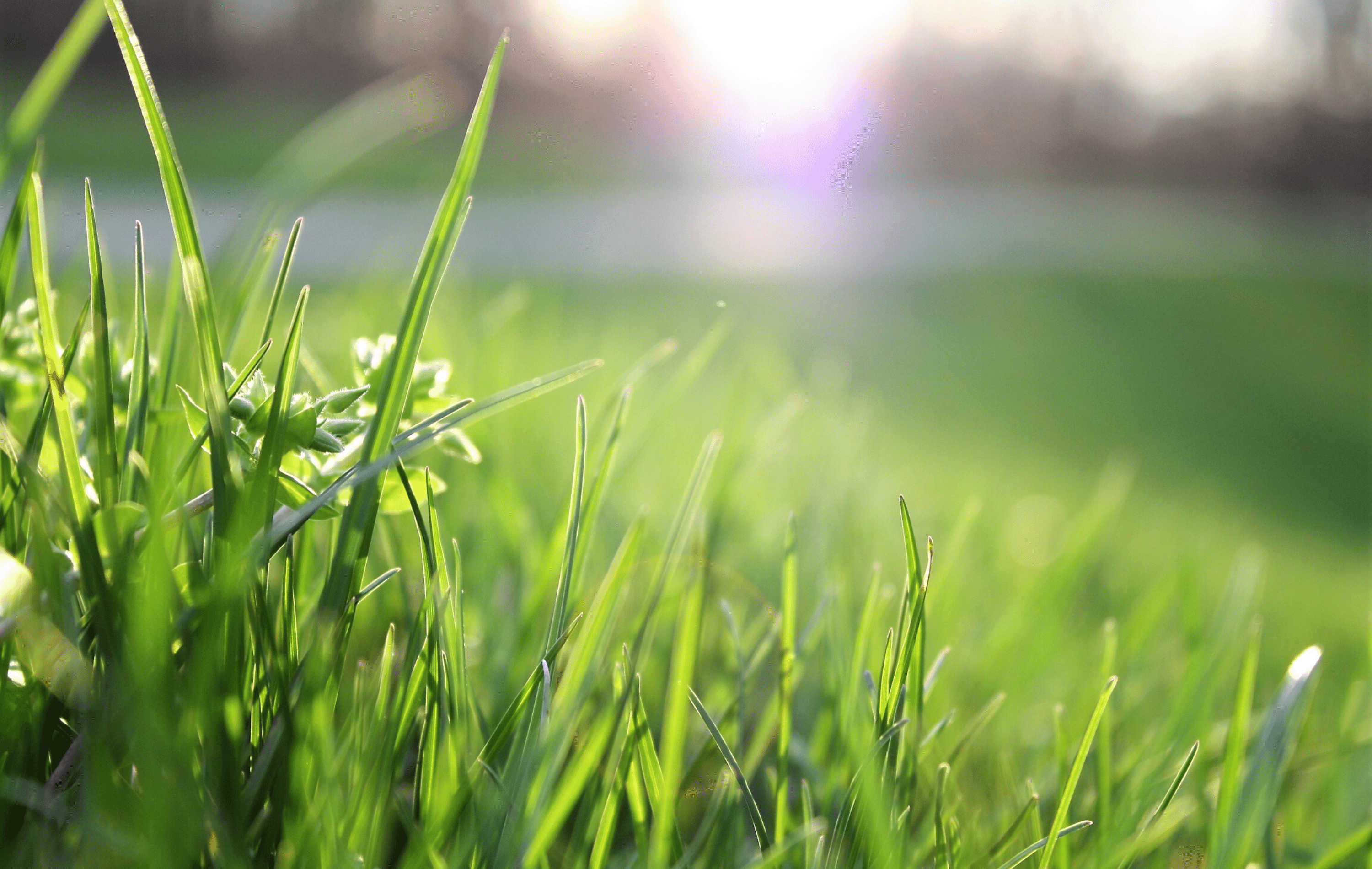 3 Benefits Compost Gives Your Lawn