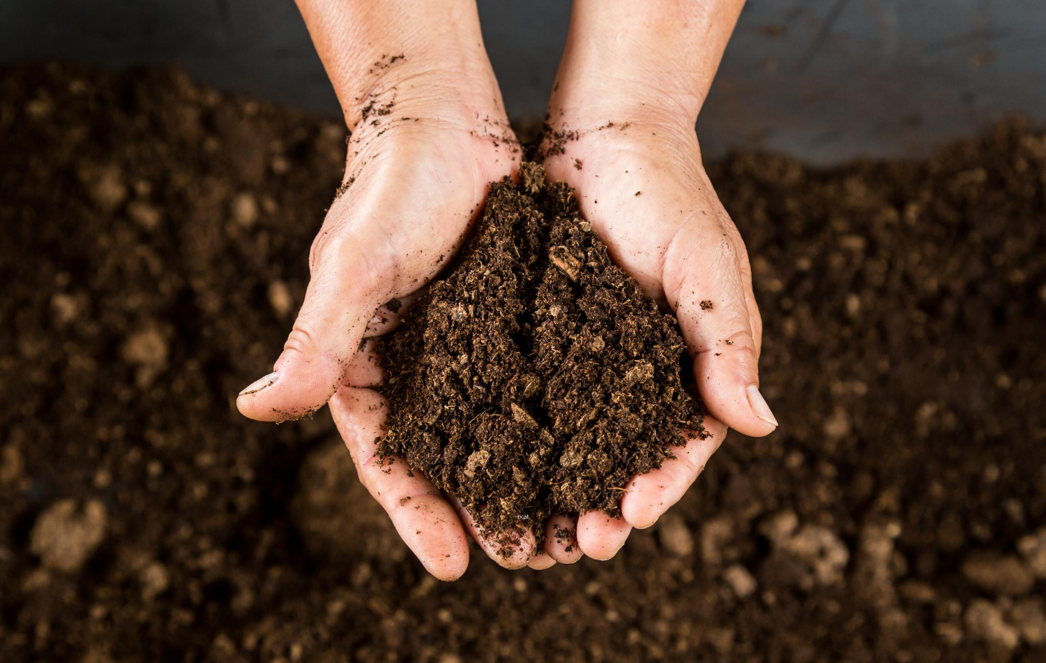 What Are the Different Types of Compost and Which One Should I Use_